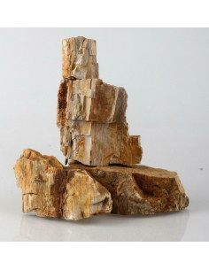 Fossil Wood (au kilo)