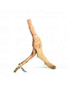 Trunk Wood TW06