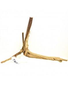 Trunk Wood TW19