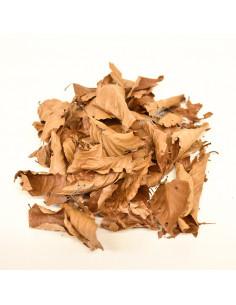 Nano feuilles de hêtre x20