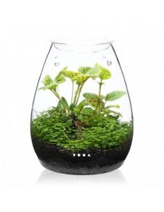 DOOA Glass pot SHIZUKU